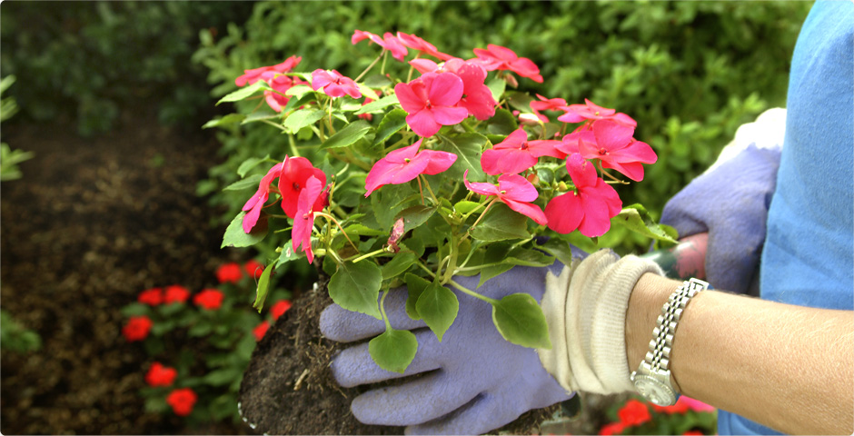 Let Us Beautify Your Yard!
